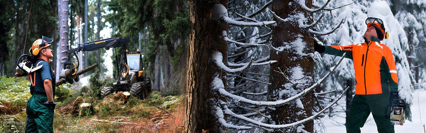 Forest Profi - numarul 1 in Romania